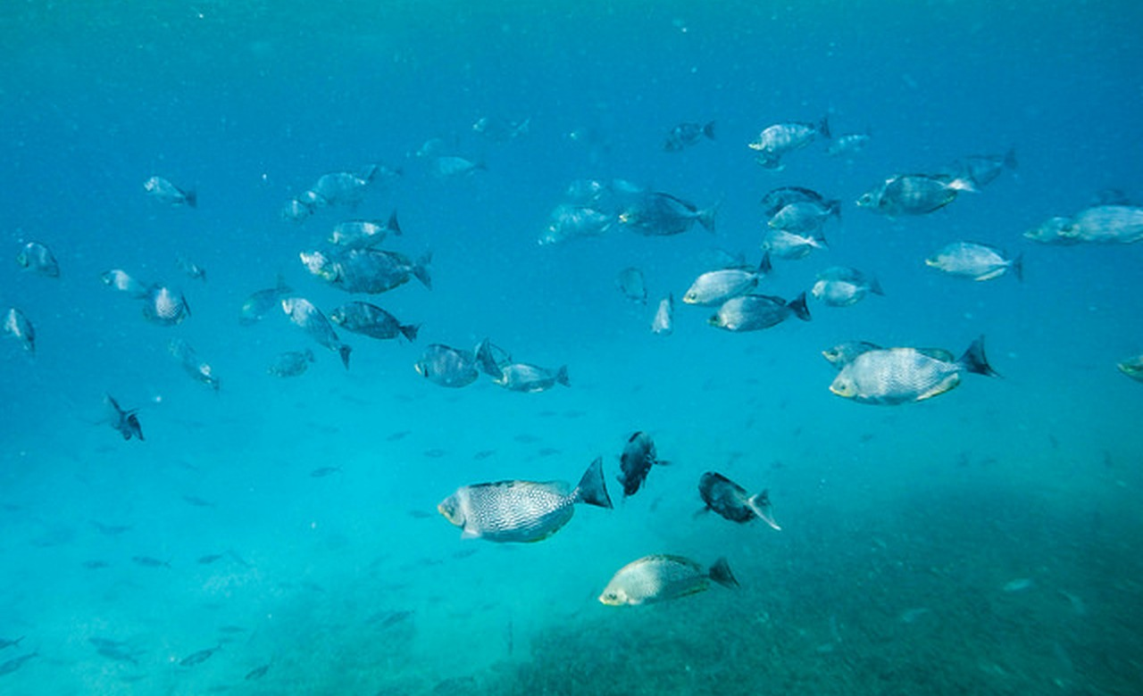 Go Snorkeling at Pigeon Island