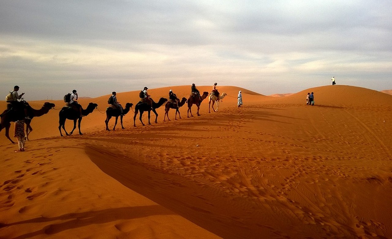 Enjoy a camel safari in the Thar Desert