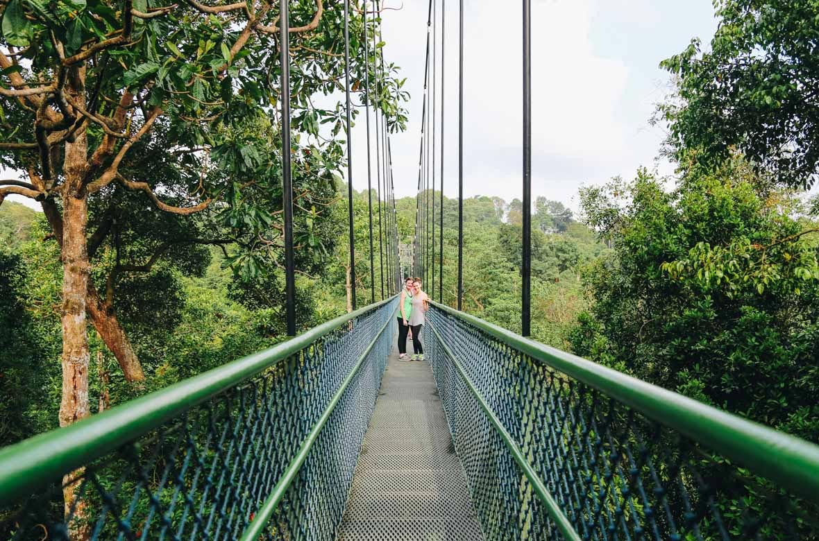 Brave the Mac Ritchie Treetop Walk