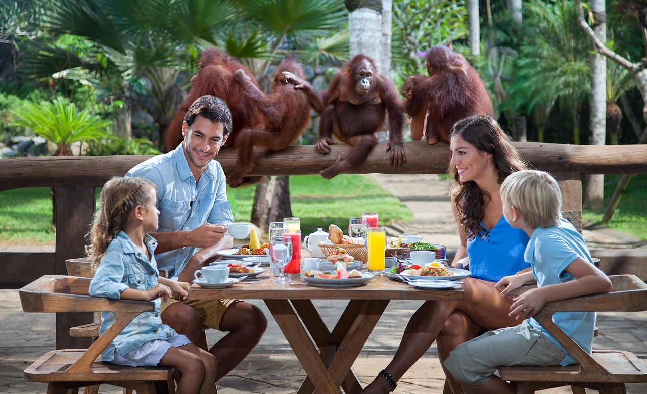 Breakfast With Orangutans
