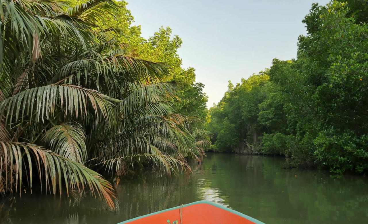 Cruise Through the Mangroves