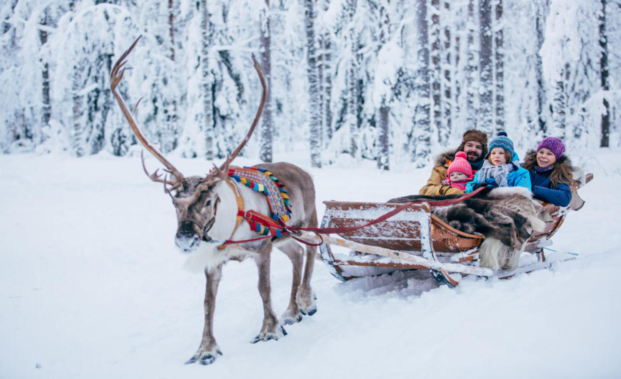 Reindeer sleeding