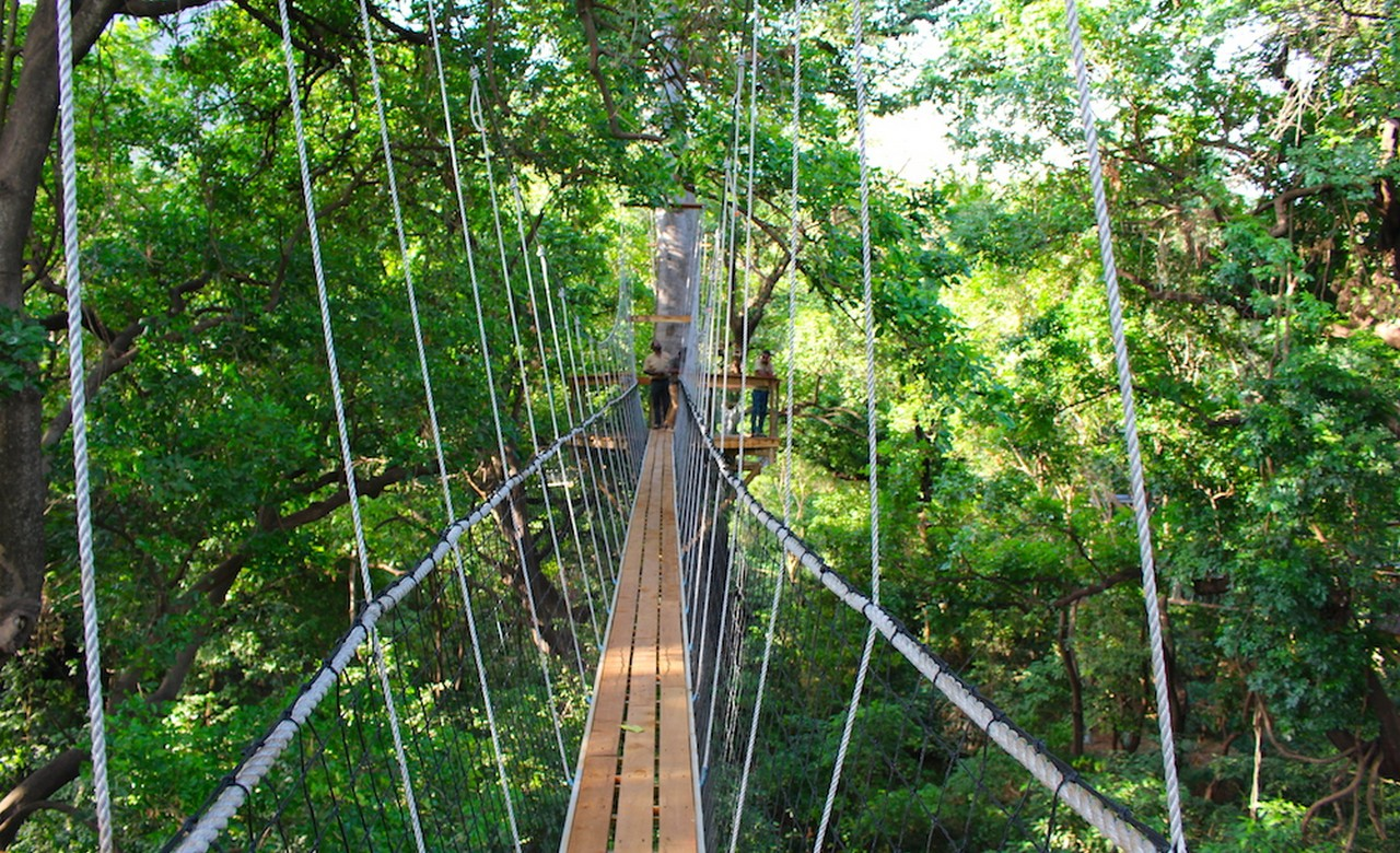 Hike in the Rainforest's Canopy at Lake Manyara National Park