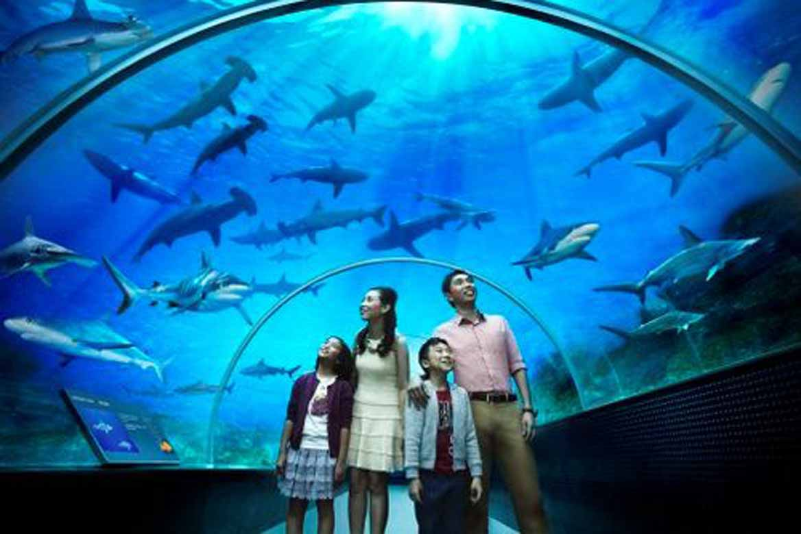 Marine Park SEA Aquarium