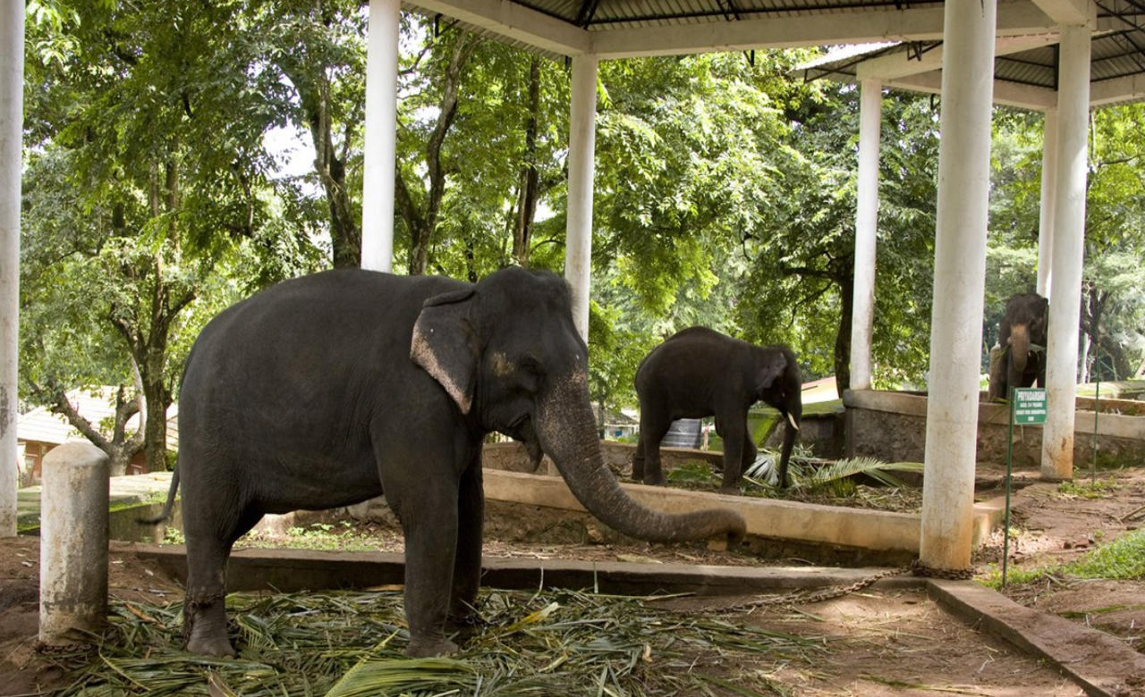 elephants training centre