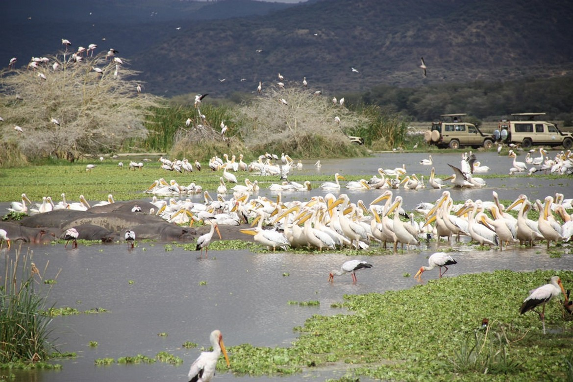 Lake Manyara National Safari  From Arusha