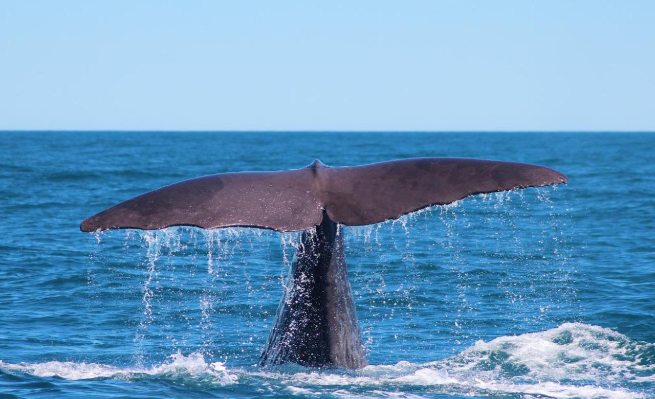 Go on a Whale Watching Cruise