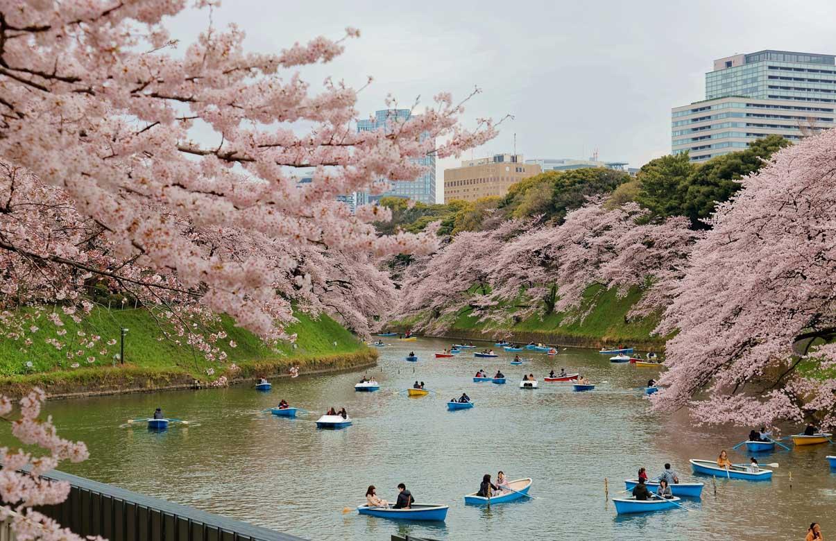Chidorigafuchi Park 2