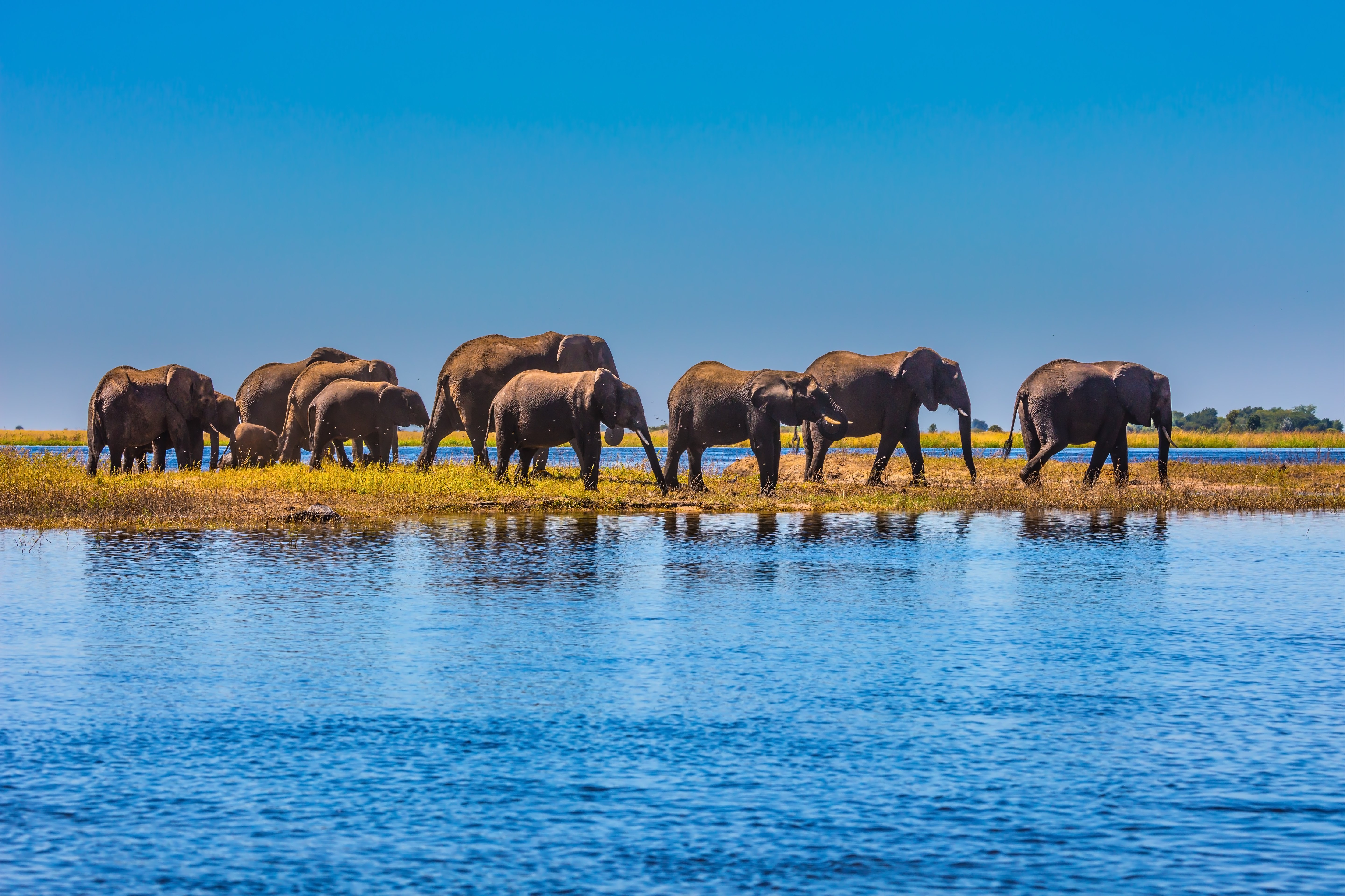 Elephant interaction and safaris