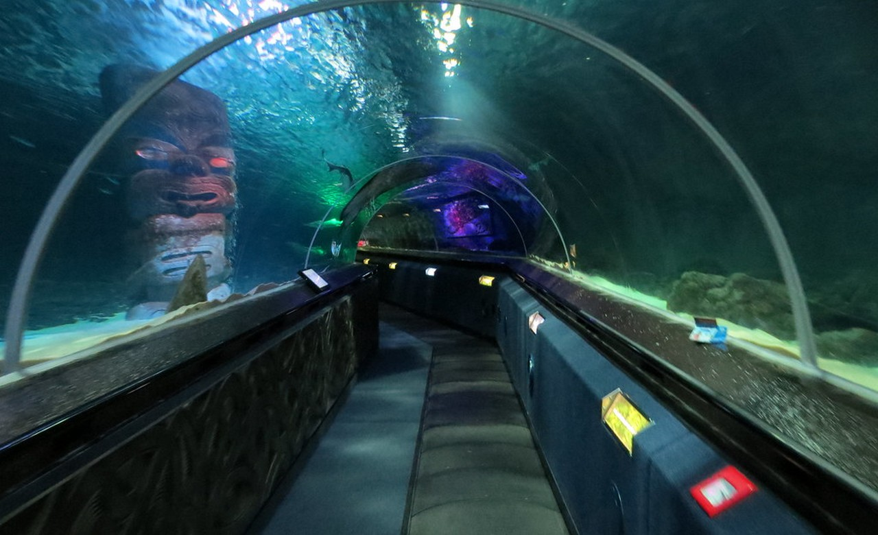 Kelly Tarltons Sea life Aquarium Entry