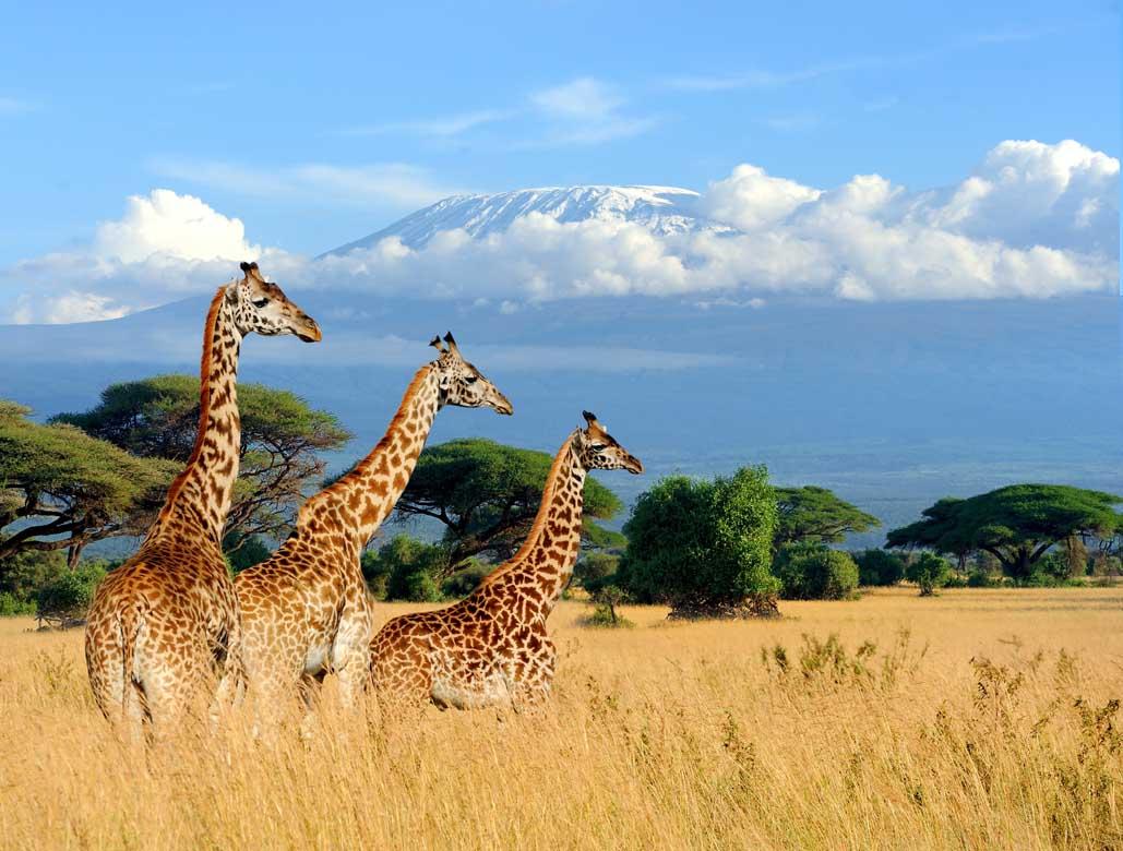 Mount Kenya 3