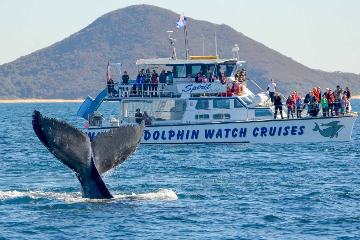 Port Stephens Dolphin Watch 2
