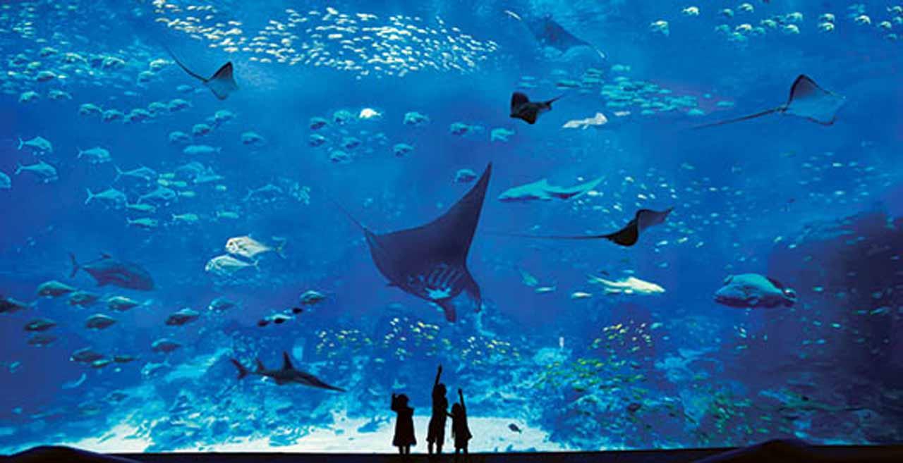 SEA Aquarium 4jpg