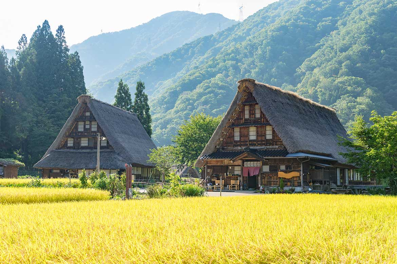 Shirakawa Go Ancient Village