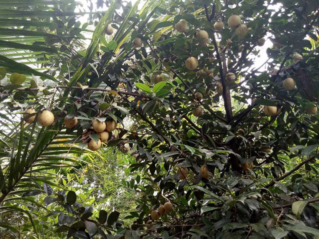 Spice Plantation 2