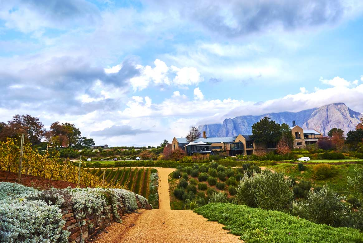 Stellenbosh Winery