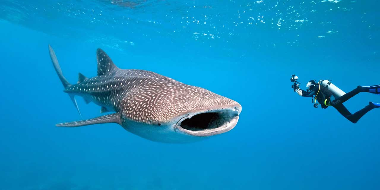 Oslob Whale Shark Watching Tour