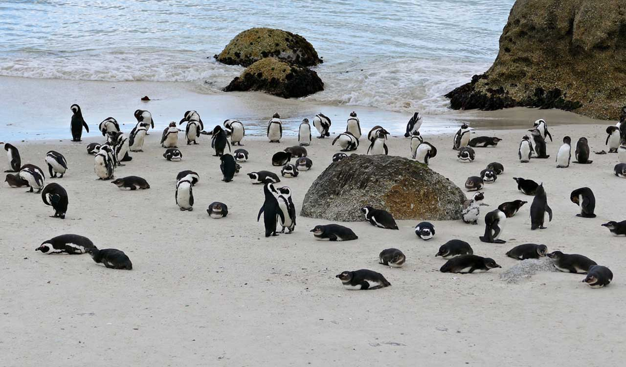 Full Day Cape Peninsula Tour