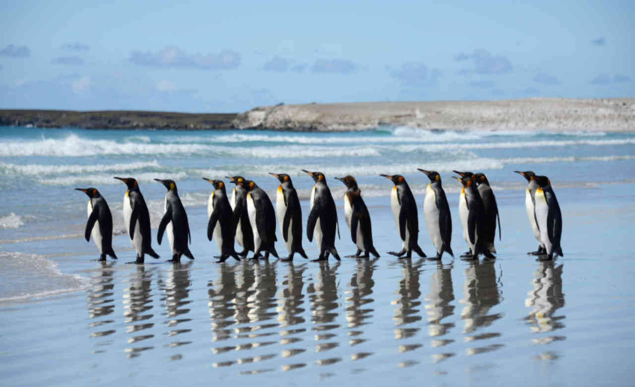 Phillip Island with Penguin Parade