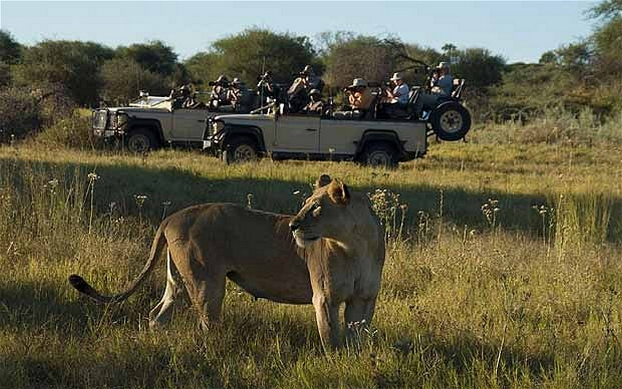 Game Drive in Moreimi