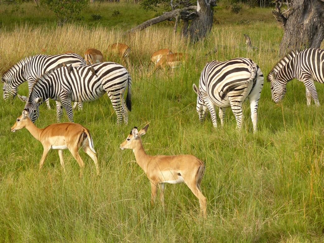 chobe botswana national park